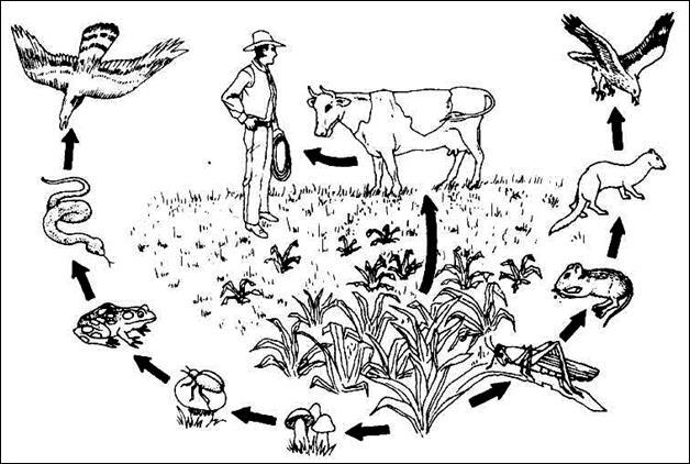 Расположи рисунки растений и животных разнообразные способы защиты